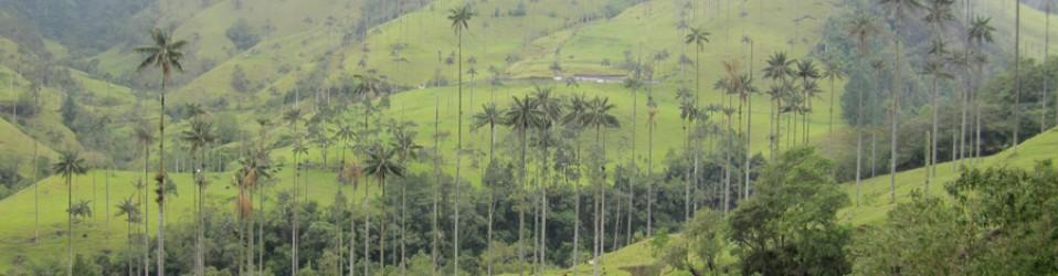 Путешествие по Колумбии. Дни 35,36,37. (17,18,19 октября). Salento.