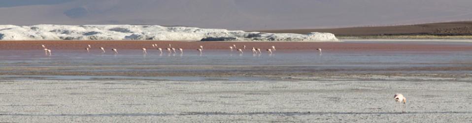Путешествие по Боливии. День 18. (18 февраля). Salar de Uyuni. Итоги.