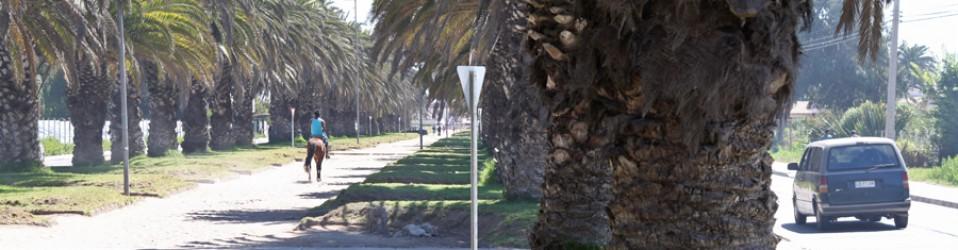 Путешествие по Чили. Дни 6, 7, 8 (24, 25, 26 февраля). La Serena.