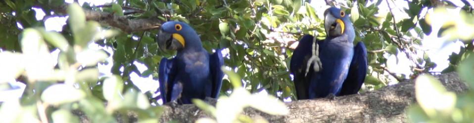 Путешествие по Бразилии. Дни 14, 15 (11, 12 мая). Pantanal, Campo Grande.