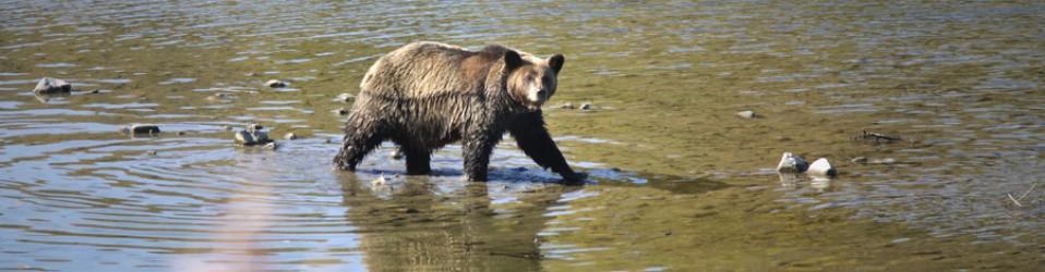 Путешествие по Сахалину. Дни 26 ~ 32 (26 сентября ~ 2 октября). Медвежий заповедник.
